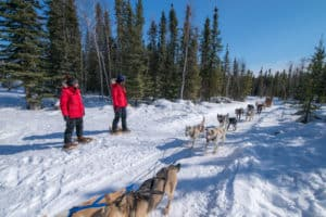Aurora-VIllage-Snowshoe-tour-dog-team-ride-combo-yellowknife