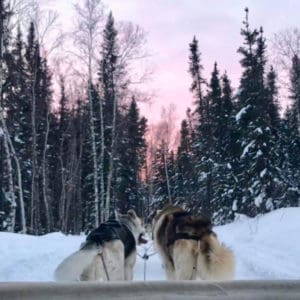 Instagram-Aurora-Village-Sled-Dogs-yellowknife-northwest-territories-pink-sunset